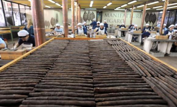 Sigaro Toscano in soccorso della filiera del tabacco